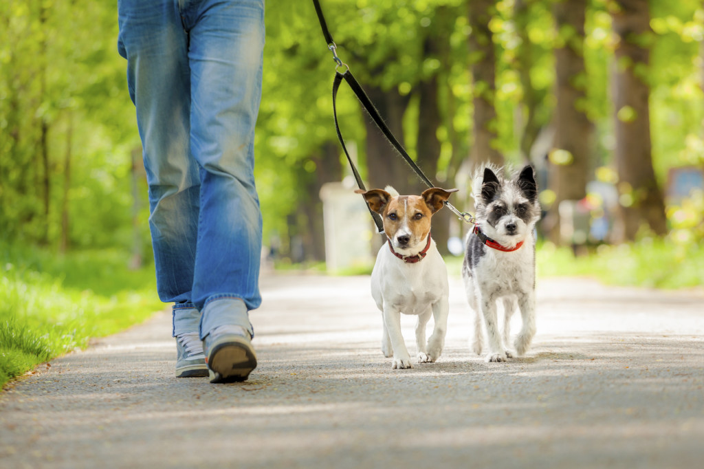 dogs going for a walk
