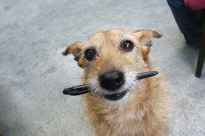 dog with a pen iStock_000002057103_Medium