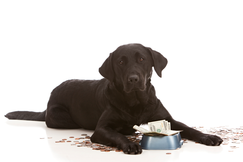 dog expenses - iStock_000063558875_Small