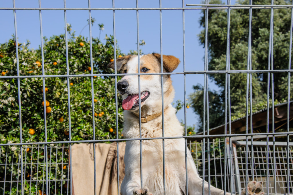 Closeup of a dog looking through the bars
