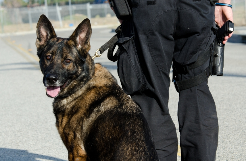police-dog-in-dogs-istock_000024146290_small