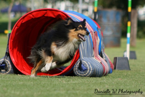 Online Agility Classes