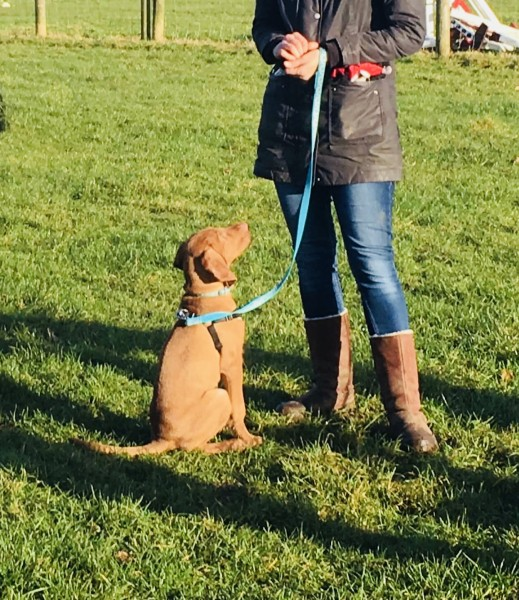 Puppy Life Skills - Wednesdays in Banstead