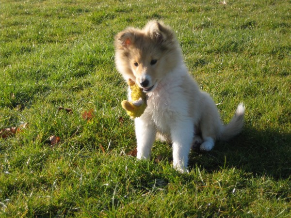 Puppy Life Skills - Tuesdays in Dorking