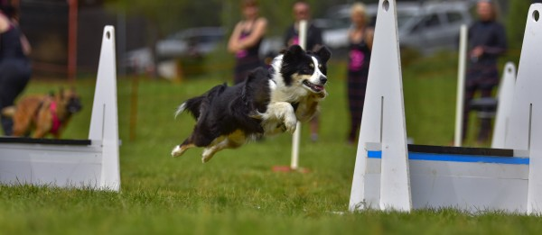 Flyball Workshop